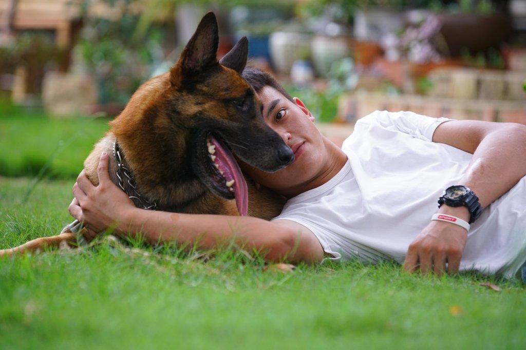 パートナー。犬と少年